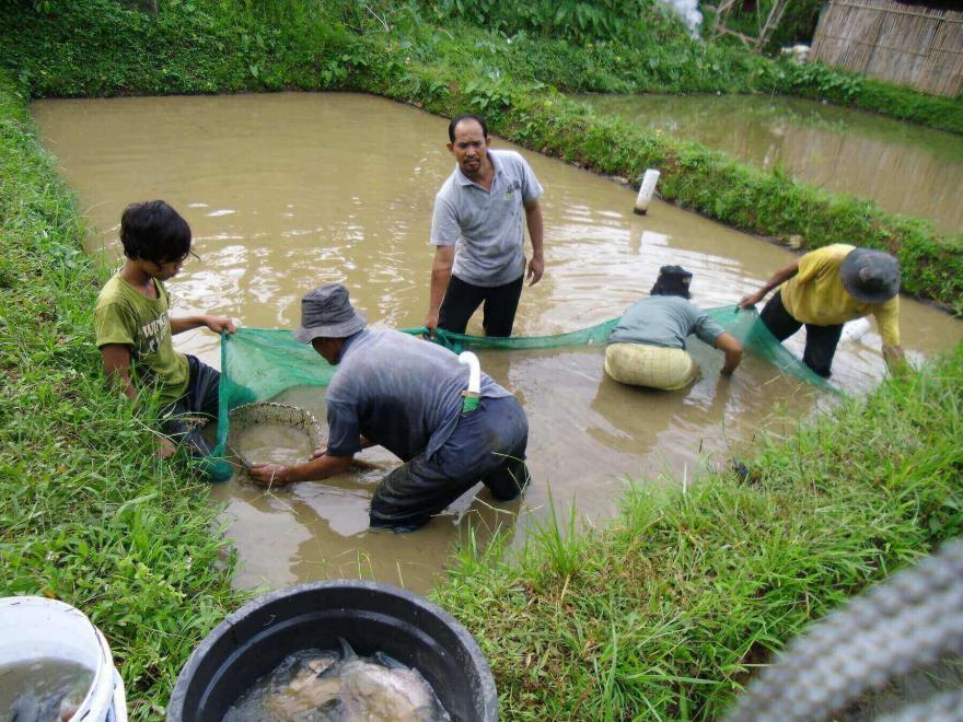 Image : Budidaya Ikan Sebagai Potensi Dusun Sigran
